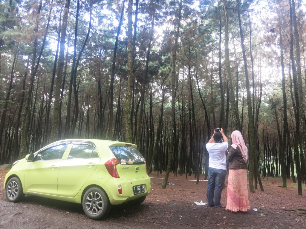 mencari spot terbaik di Hutan Pinus