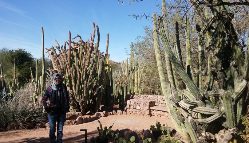 Menghitung Kaktus di Desert Botanical Garden
