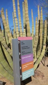 kaktus3